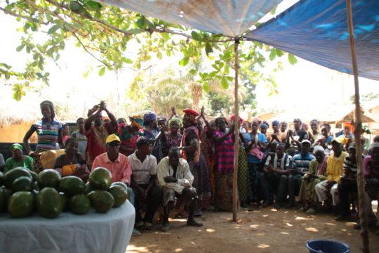 Avocado Guinea